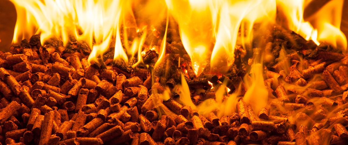 head biomassa