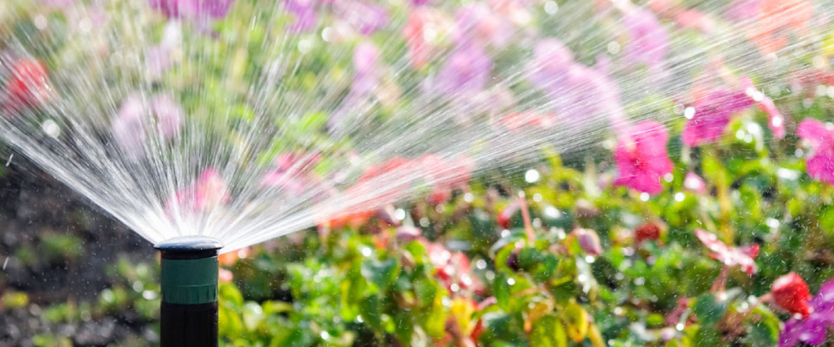 head-irrigazione